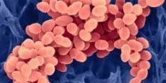 امراض البكتيريا والفيروسات