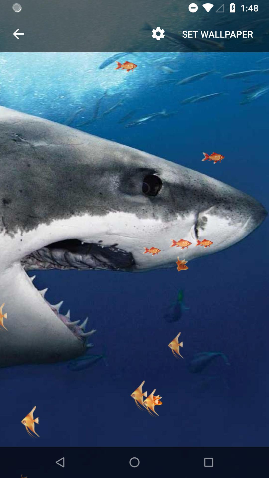 صوره خلفية القرش المتحرك لأجهزة الاندرويد والسامسونج